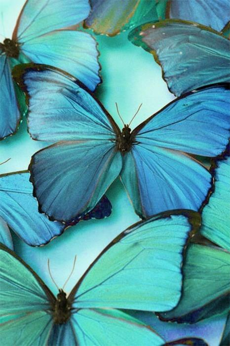 Butterflies Blue
